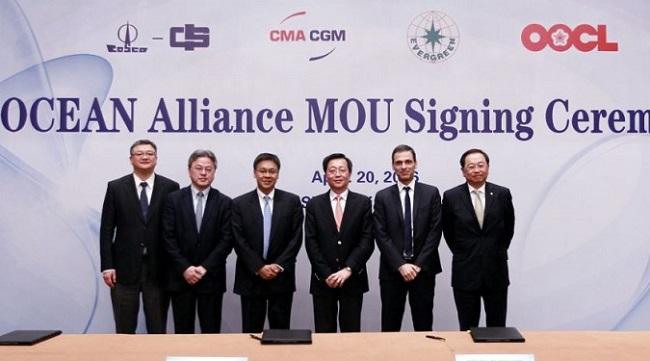 Ocean Alliance получила зеленый свет