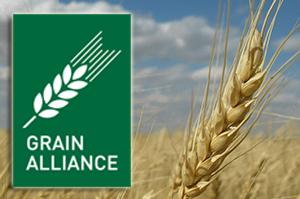 Grain Alliance увеличит складскую логистику в два раза